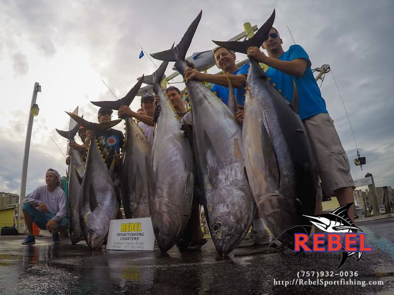 Rebel sportfishing offshore deep sea fishing va beach va for Virginia beach fishing charters