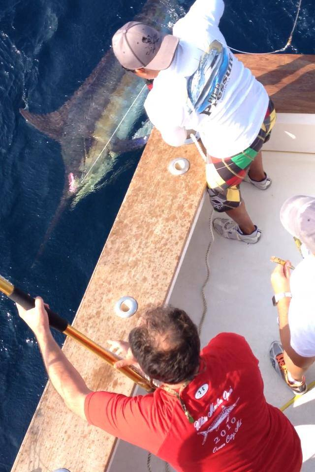 Huge Blue Marlin Caught & Released from Rebel