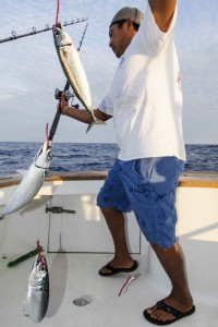 Live Baiting Marlin,