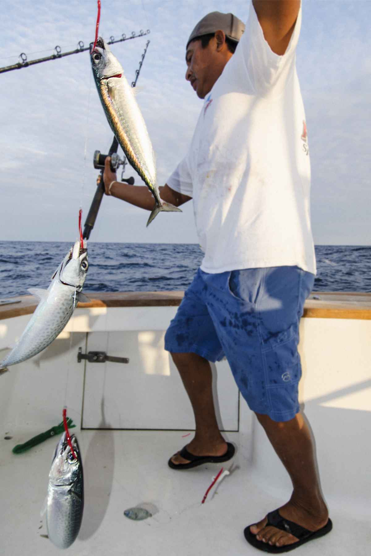Live Baiting Marlin,