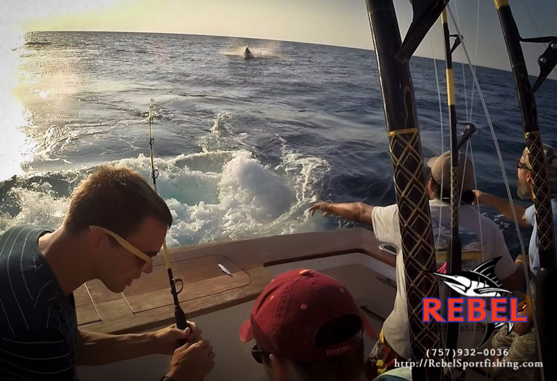 Adam Mewhort catching a HUGE blue marlin on Virginia Beach Fishing Charters