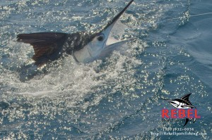 Once in a lifetime marlin bite