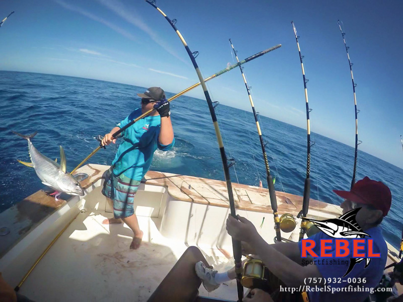 Fishing photos yellowfin tuna va beach fishing charter boat for Charter fishing virginia beach