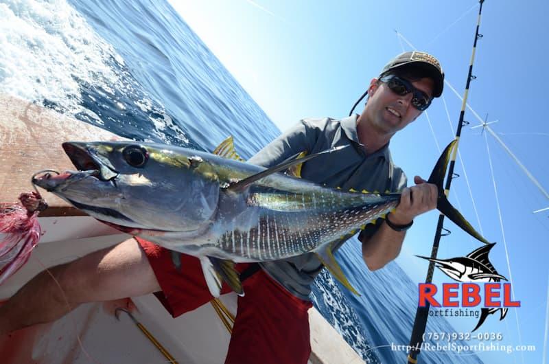 Yellowfin Tuna Trips