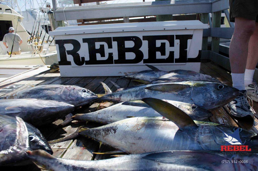 VA Beach Charter Fishing Boat
